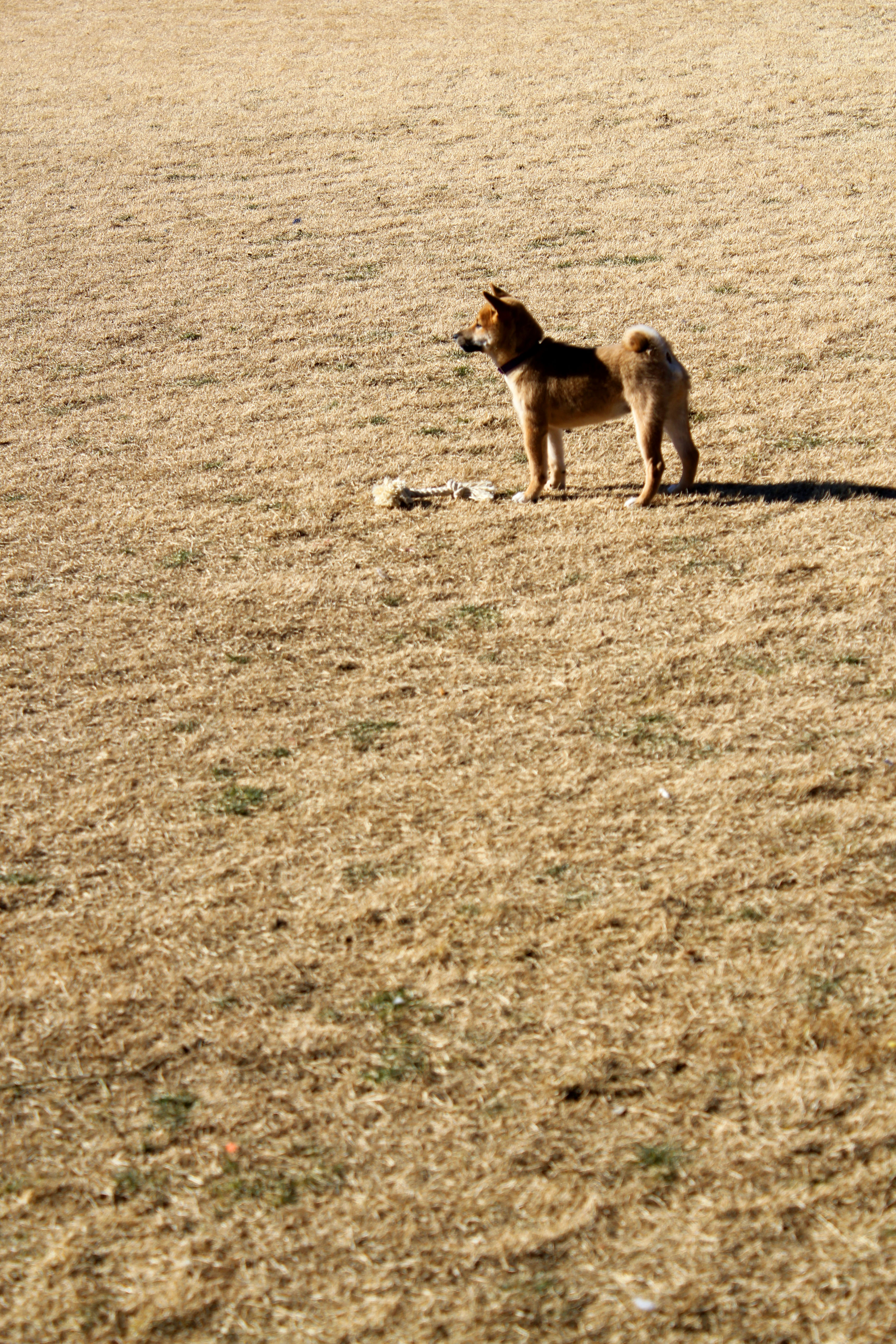Equestrian Dog Park Henderson Nv